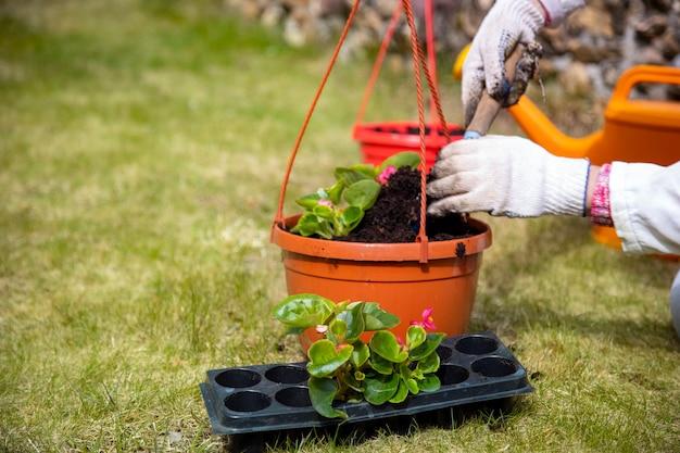 鉢に花を植える庭師の手のクローズアップ