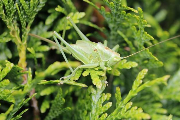 정원에 있는 식물의 잎에 메뚜기의 근접 촬영