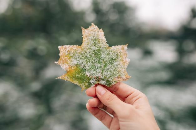 Крупный план зеленого и желтого кленового листа, покрытого снегом, в руке молодой женщины.
