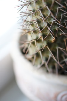 窓辺の窓の近くの鉢に生えている観葉植物のクローズアップ