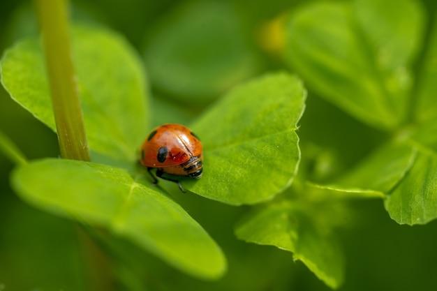 緑の葉のてんとう虫のクローズアップ