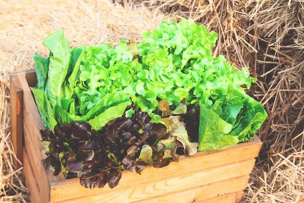 원시 갓 수확 된 샐러드 야채 가득한 큰 나무 상자의 근접 촬영