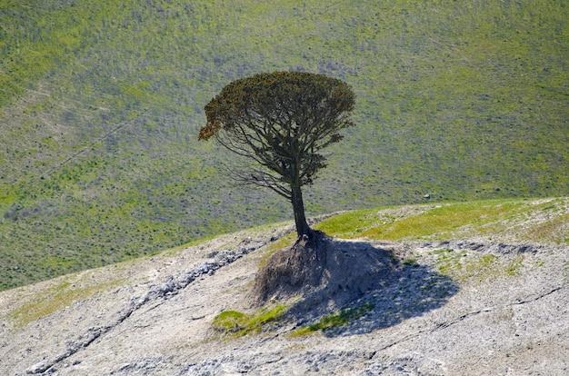 晴れた日にイタリア、トスカーナ州の丘の上の孤独な木のクローズアップ