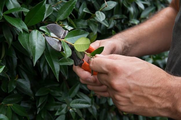 外の茂みを剪定する男の手のクローズアップ