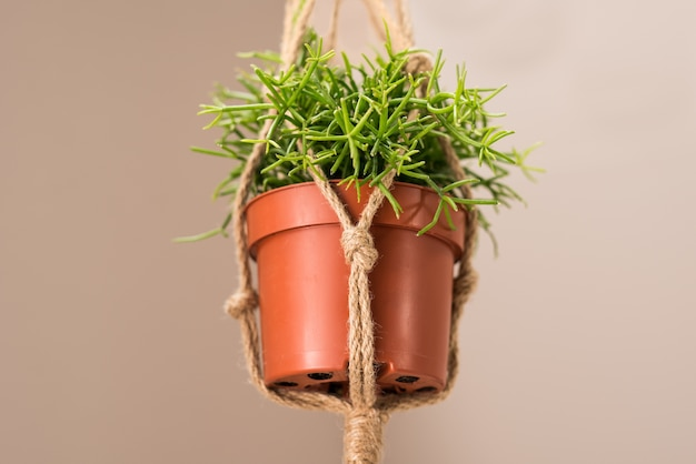 황마 로프와 함께 천장에 매달려 화분에 심은 실내 식물의 근접 촬영
