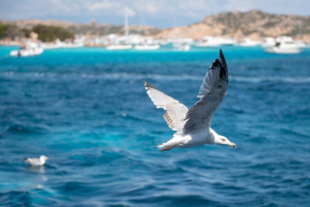 イタリア、サルデーニャ、マッダレーナ諸島のブデッリ島近くの海の上を飛んでいるカモメのクローズアップ