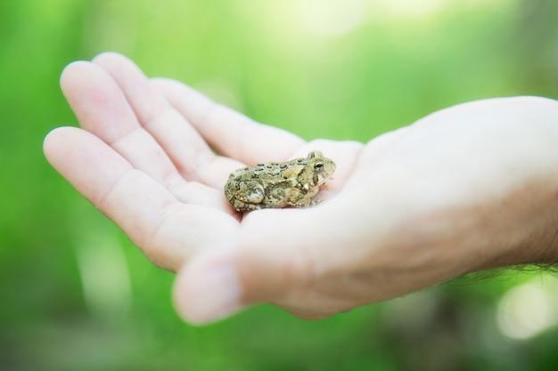 昼間の日光の下で人の手に小さなカリフォルニアのヒキガエルのクローズアップ