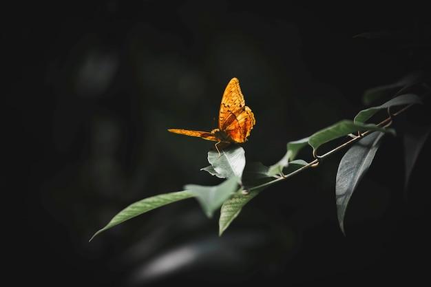 葉の上の小さなべっ甲のクローズアップ