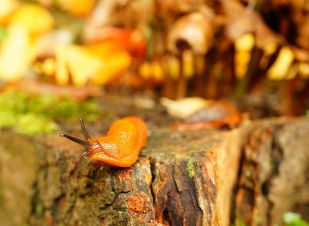 햇빛 아래 숲과 이끼로 둘러싸인 껍질이없는 달팽이의 근접 촬영