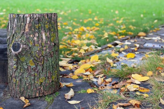 Крупным планом покрытый мхом пень как скамейка на лужайке с опавшими листьями заднего двора в ...