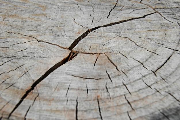 昼間の日光の下で木の切り株のクローズアップ