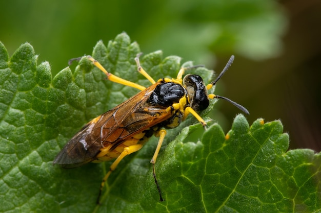 정원에서 녹색 잎에 노란색 재킷 말벌의 근접 촬영