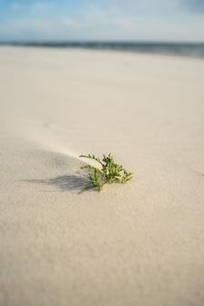 日光の下で砂の上の常緑の葉のクローズアップ