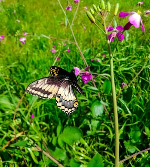 Крупным планом орегонский парусник на цветке в поле под солнечным светом