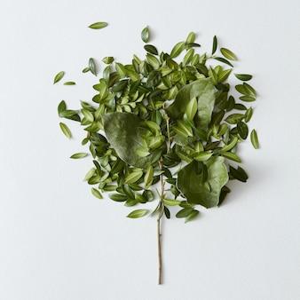 흰색 배경 위에 많은 잎이 있는 아름다운 작은 녹색 나무의 근접 촬영. 모든 포스터 또는 엽서에 좋은 장식.