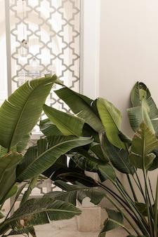 Крупный план красивых сочных зеленых тропических пальмовых листьев около бежевой стены.