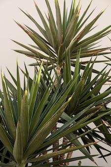 Крупный план красивых сочных зеленых тропических пальмовых листьев.
