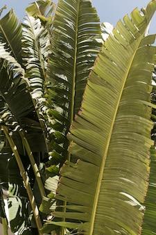 美しい緑豊かな熱帯のヤシの葉のクローズアップ。