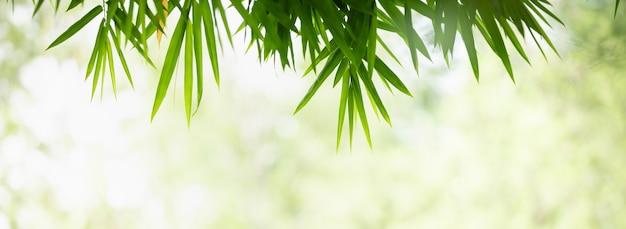 Крупный план красивой природы с видом на зеленый бамбуковый лист на фоне затуманенной зелени в саду