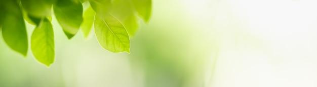 Крупный план красивых зеленых листьев взгляда природы на запачканной предпосылке зелени в саде с космосом экземпляра используя как концепцию титульной страницы предпосылки.