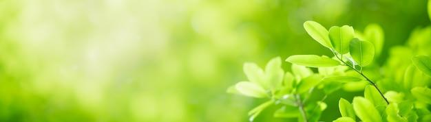 美しい自然のクローズアップは、背景として使用してコピースペースと庭のぼやけた緑の背景に緑の葉を表示します。