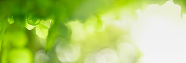Крупным планом вид красивой природы зеленые листья на фоне размытой зелени в саду