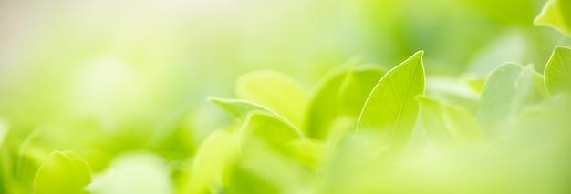 정원의 흐릿한 녹지 배경에 있는 아름다운 자연 보기 녹색 잎의 근접 촬영