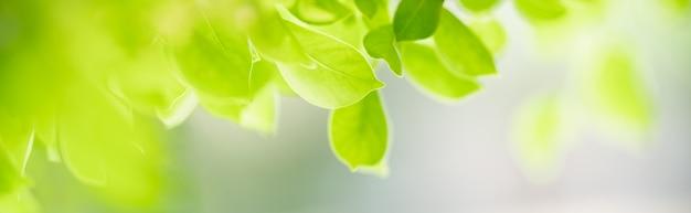 Крупный план красивых зеленых листьев взгляда природы на запачканной зелени под фоном солнечного света в саду с космосом экземпляра, используя как концепцию титульной страницы предпосылки.