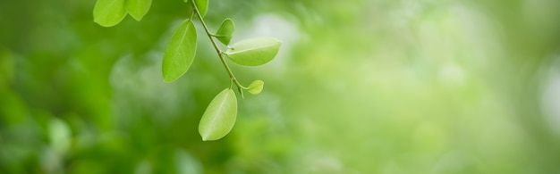 배경 표지 개념으로 사용되는 복사 공간이 있는 정원의 햇빛 배경 아래 흐릿한 녹지에 있는 아름다운 자연 보기 녹색 잎을 닫습니다.