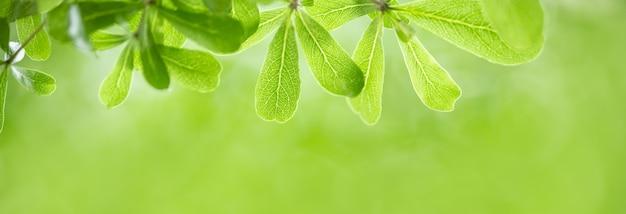 Крупным планом вид красивой природы зеленые листья на размытой зелени под солнечным светом