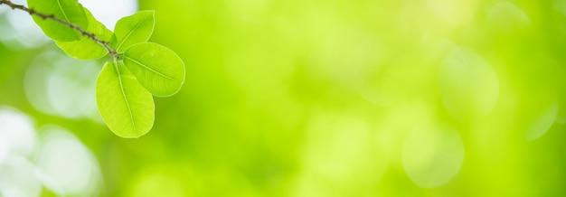 햇빛 아래 흐릿한 녹지에 아름다운 자연 보기 녹색 잎의 근접 촬영