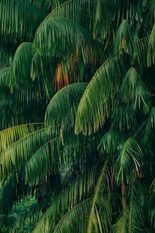 Крупным планом фон красивых пальм