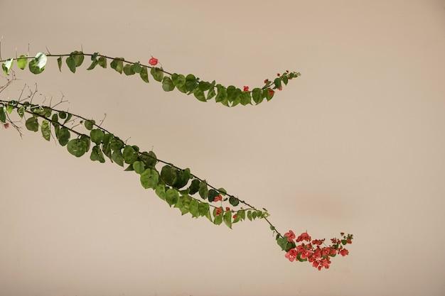 ベージュの壁に美しい赤い花と緑豊かな熱帯植物の葉のクローズアップ。