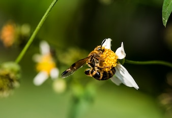 Крупный план пчелы и цветка в саде