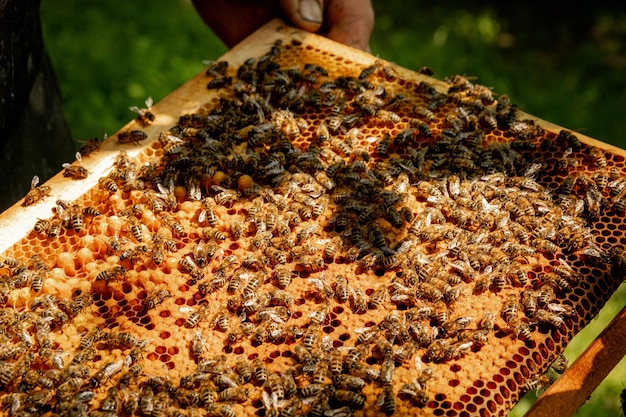 養蜂場のハニカム上のミツバチのクローズアップ