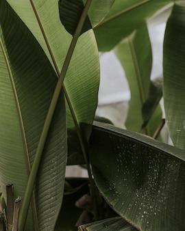 낙원의 새 잎의 근접 촬영