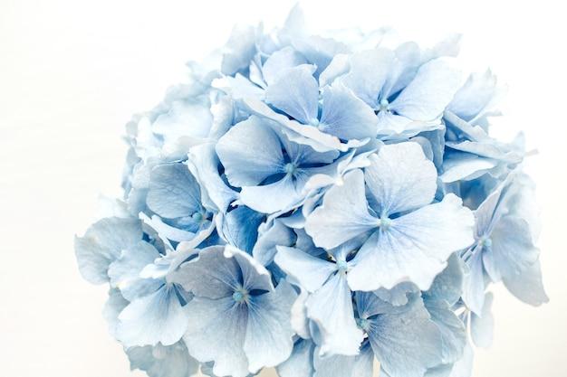 青いアジサイの花のクローズアップ