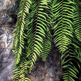 Макрофотография ветви листьев бостонского папоротника