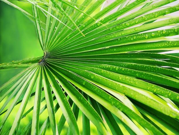 雨の後の水滴と明るい緑のヤシの葉のクローズアップ。熱帯の背景