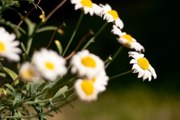 꽃 다발의 근접 촬영