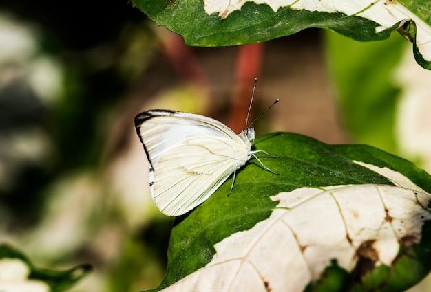 자연 속에서 나비의 근접 촬영