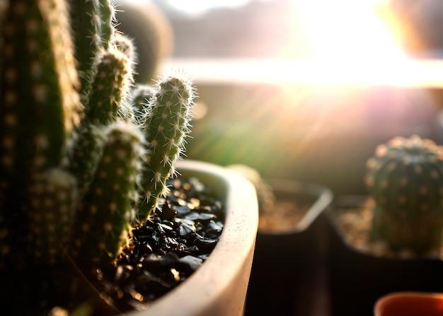 Макрофотография кактусовых комнатных растений