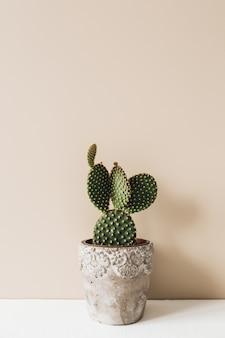 ベージュの植木鉢のサボテンのクローズアップ