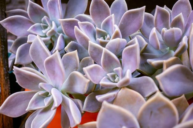 温室内のサボテン多肉植物の庭の砂漠の植物のクローズアップ