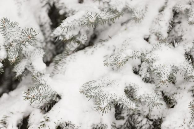 Крупным планом рождественское вечнозеленое дерево, покрытое толстым слоем снега