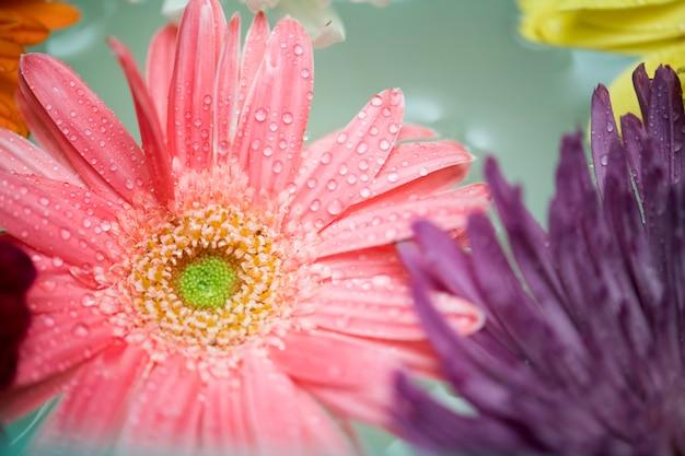 水の背景に浮かぶカラフルな花のクローズアップ