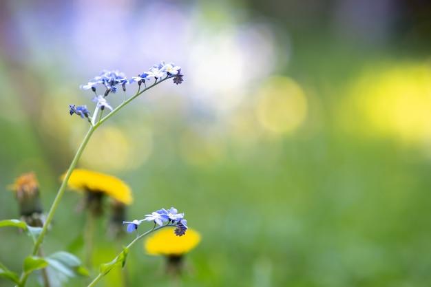 녹색 공원에 피는 다채로운 부드러운 봄 꽃의 근접 촬영.