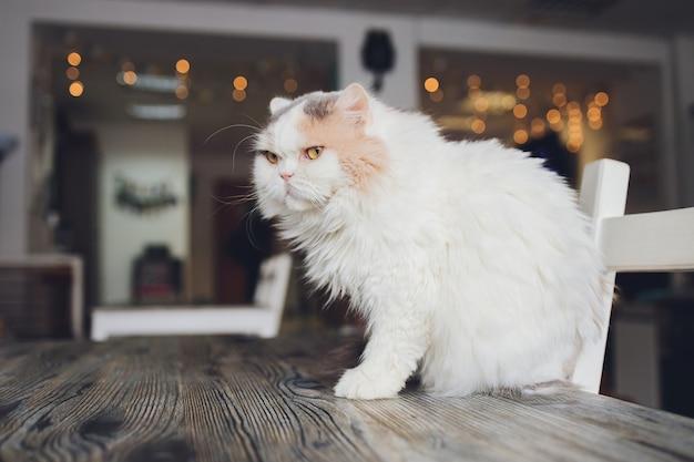 テーブルの上に座って自宅で屋内でリラックスしたかわいい飼い猫猫feliscatusのクローズアップ。