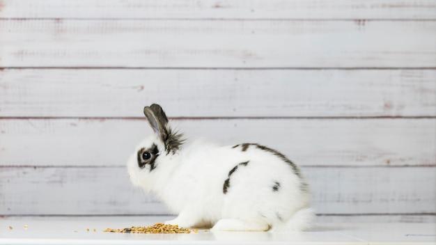 귀여운 흰 토끼의 클로즈업은 나무 배경에서 마른 설치류 음식 믹스를 먹고 있습니다
