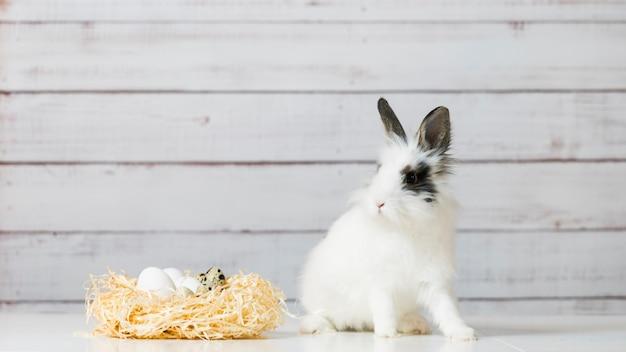 귀여운 흰 토끼의 클로즈업이 계란이 있는 짚 둥지 근처에 앉아 있다
